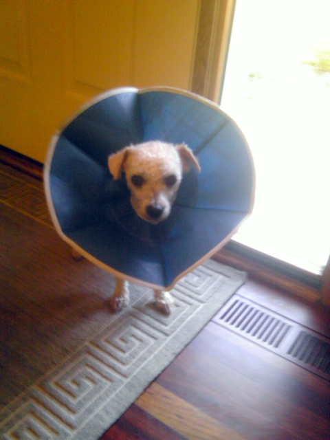 Buzz and the Cone of Shame